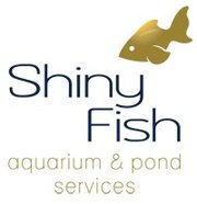 shiny-fish